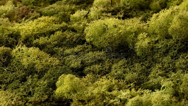 Groen de close-upbos van de mostextuur na regen stock foto's