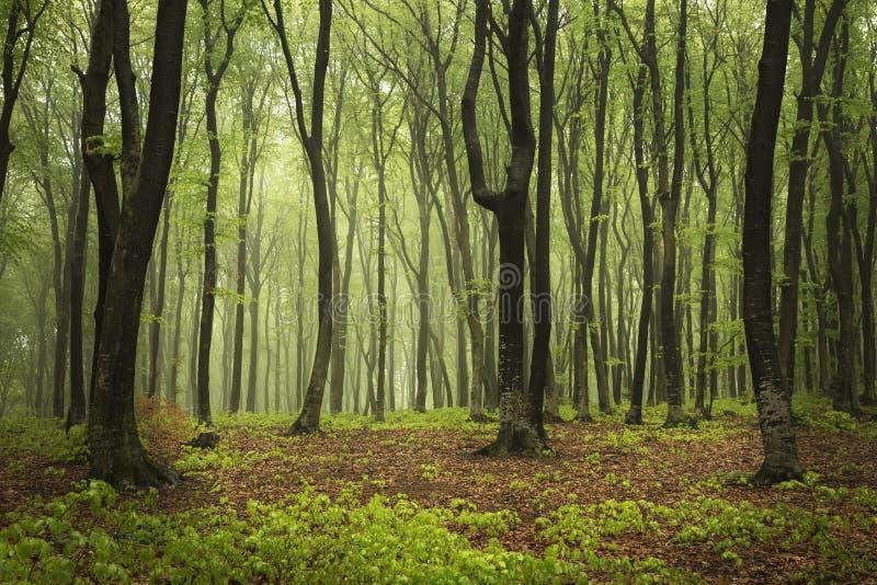 Download Groen De Lentebos In Zonstralen Stock Foto - Afbeelding bestaande uit timmerhout, dageraad: 54075404