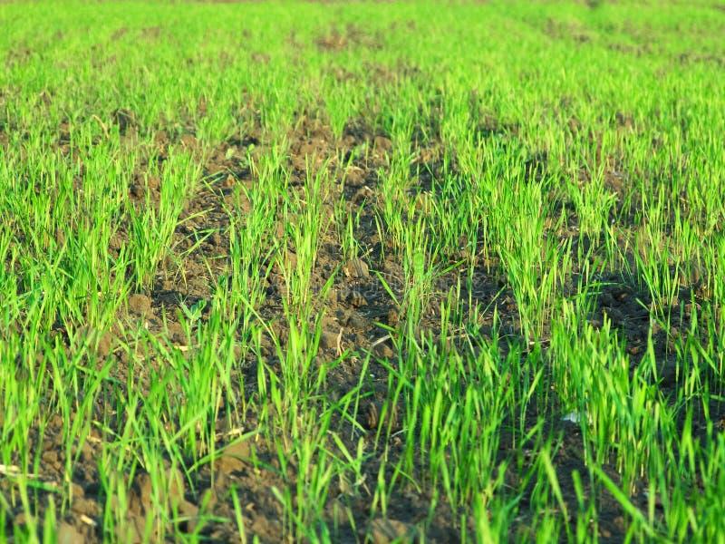 Groen de weidelandschap van het gras stock foto's