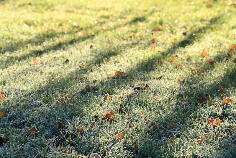 Groen de wintergebied van het Gras stock afbeelding