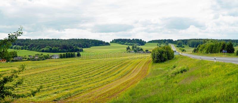 Groen de zomerbos royalty-vrije stock afbeelding