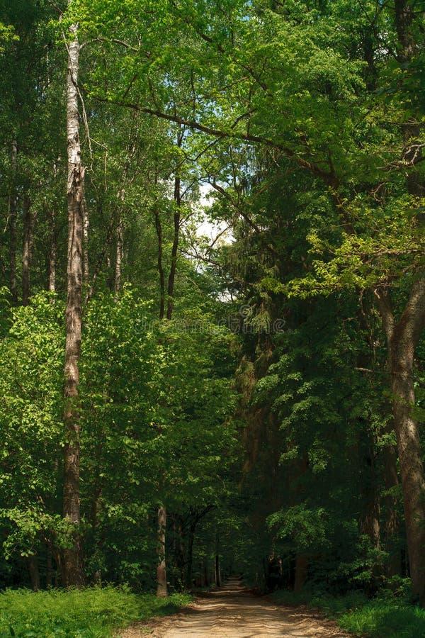 Groen de zomerbos royalty-vrije stock afbeeldingen