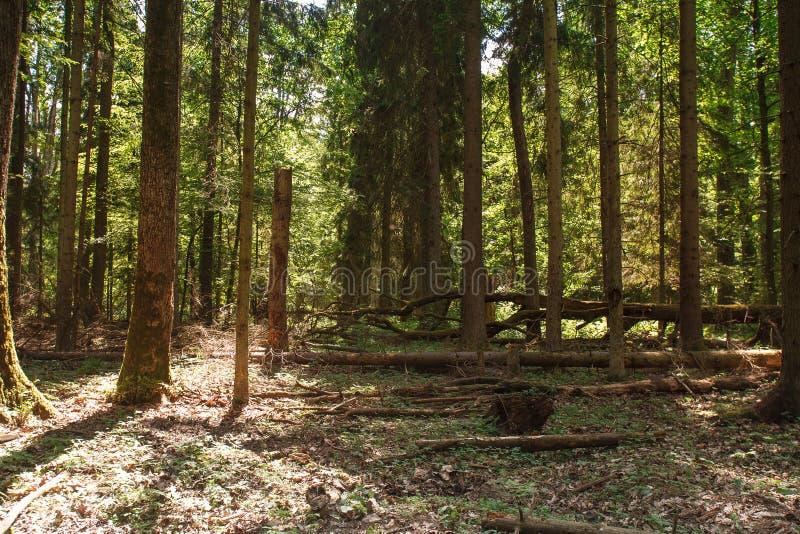 Groen de zomerbos stock foto's