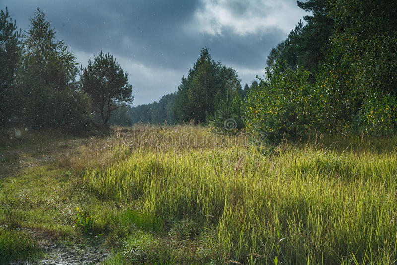 Groen de zomerbos stock afbeelding