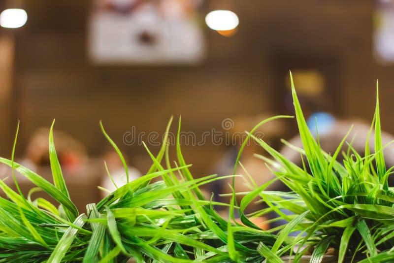 groen decoratief die gras in potten in de tuin dichtbij de koffie in een moderne Europese stad wordt geplant royalty-vrije stock afbeelding