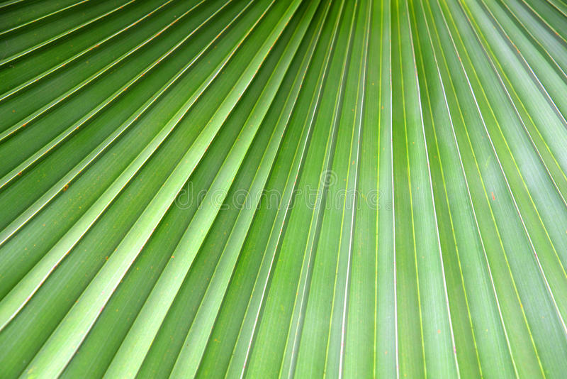 Groen dicht omhooggaand palmblad als achtergrond stock foto