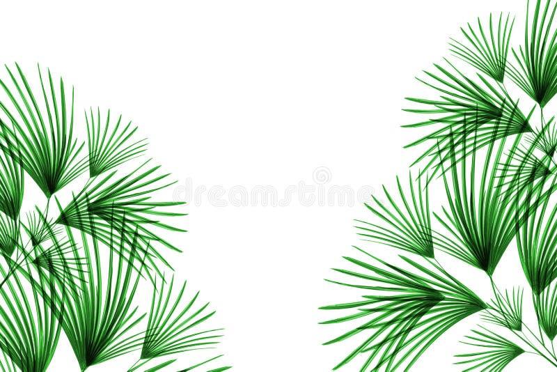 Groen die bladerenpatroon, bladpalm op witte achtergrond wordt geïsoleerd stock foto