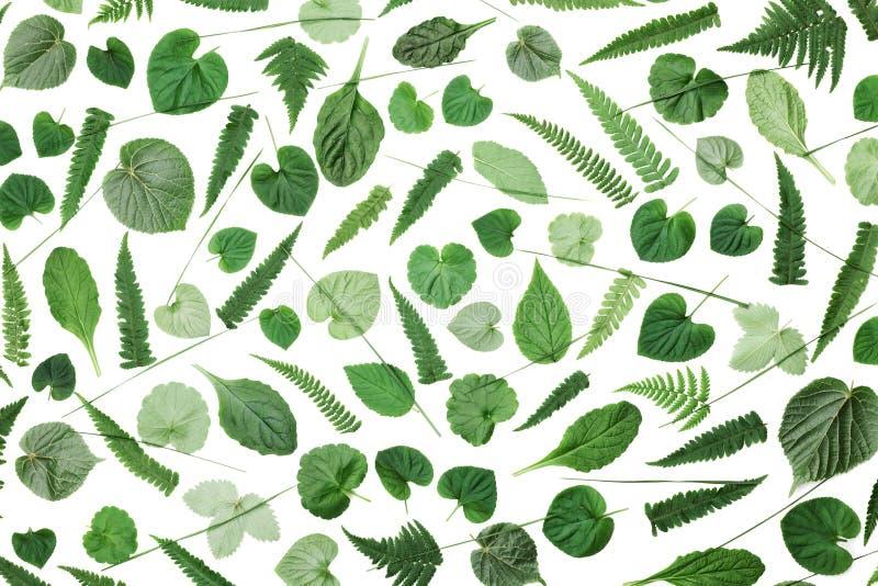 Groen die bladerenpatroon op witte hoogste mening wordt geïsoleerd als achtergrond Vlak leg het stileren royalty-vrije stock fotografie