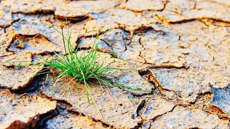 Groen die gras op droog verontreinigingsland wordt gekweekt royalty-vrije stock afbeelding