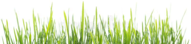 Groen die graspanorama op witte achtergrond wordt geïsoleerd royalty-vrije stock fotografie