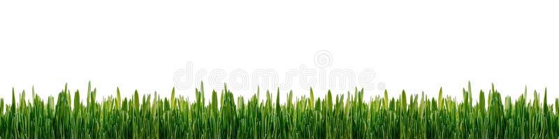 Groen die graspanorama op witte achtergrond wordt geïsoleerd royalty-vrije stock foto