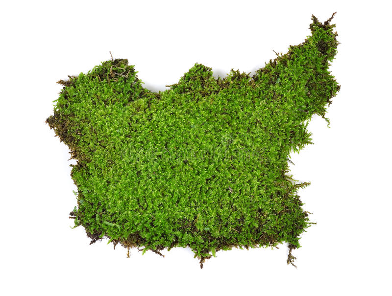 Groen die mos op witte bakground wordt geïsoleerd royalty-vrije stock fotografie
