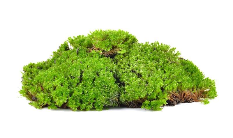 Groen die mos op witte bakground wordt geïsoleerd stock foto