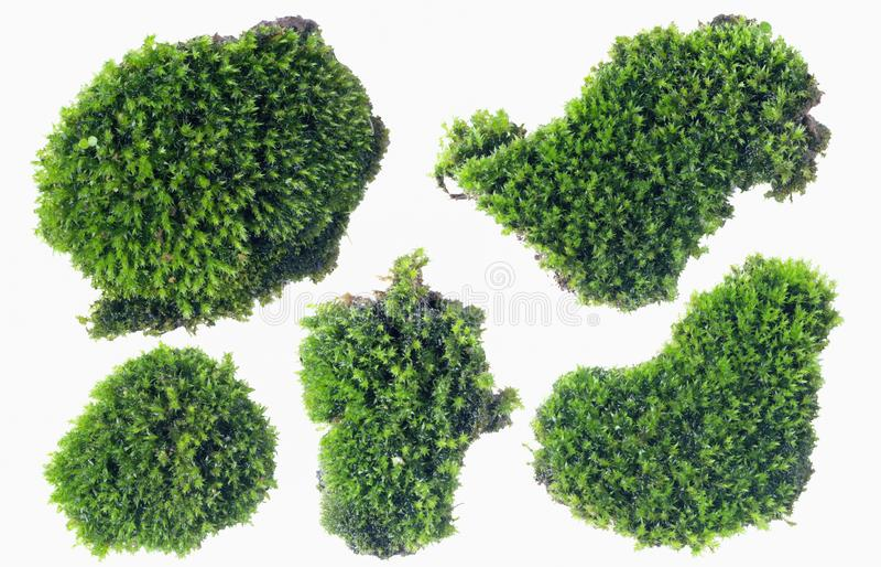 Groen die mos op witte dichte omhooggaand wordt geïsoleerd als achtergrond royalty-vrije stock foto's