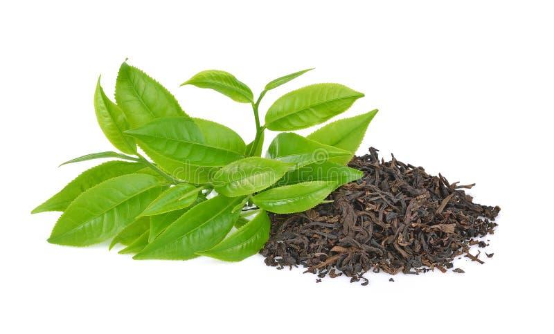 Groen die theeblad op witte achtergrond wordt geïsoleerd stock afbeelding
