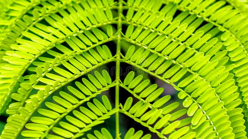Groen doorbladert van varen ware kleur stock foto's