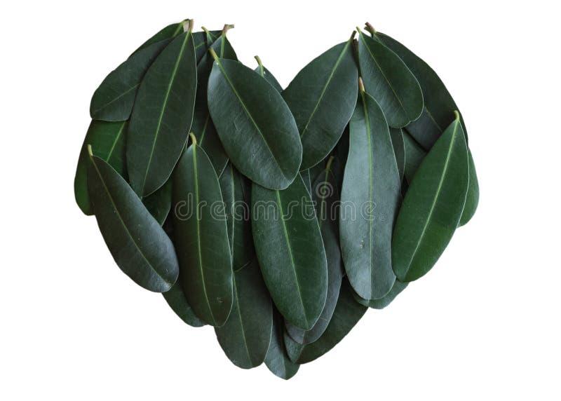 Groen doorbladert verzamelen zich samen in zoet ontwerp Isoleer groene hartvorm op witte achtergrond royalty-vrije stock fotografie