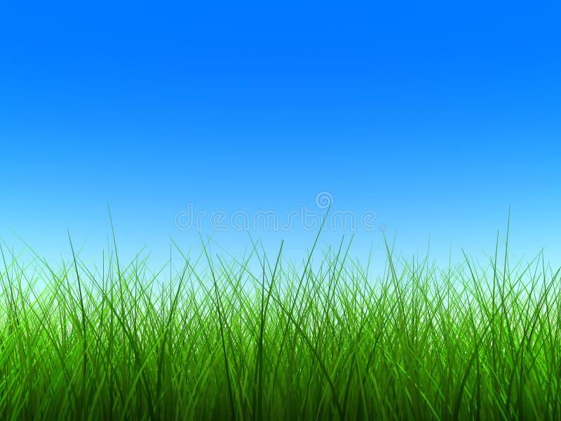 Groen dun gras vector illustratie