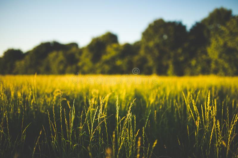 Groen en bruin gras stock foto