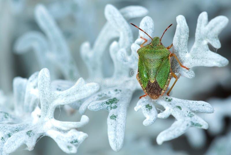 Groen en Bruin Insect op Wit Blad stock foto's