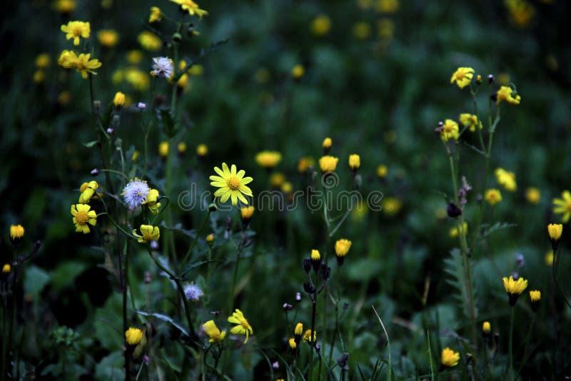 Groen en geel leuk de lente bloemenpatroon royalty-vrije stock afbeeldingen
