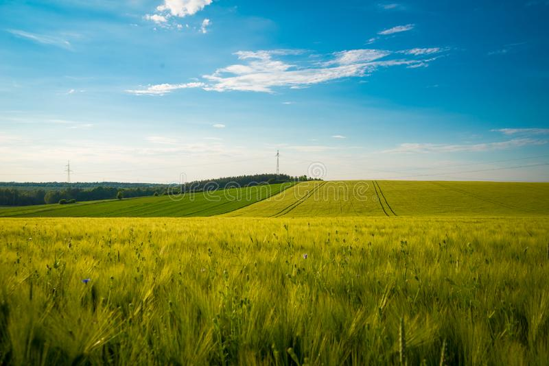 Groen en geel tarwegebied in lentetijd onder blauwe hemel, brede foto Met exemplaarruimte stock afbeelding