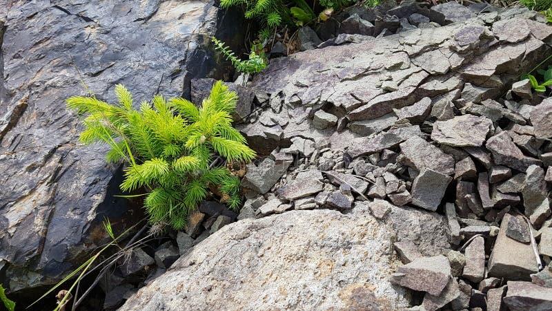 Groen en grijs stock afbeelding