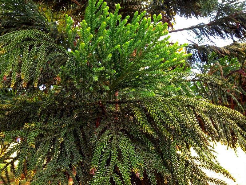 groen en jong stock afbeelding