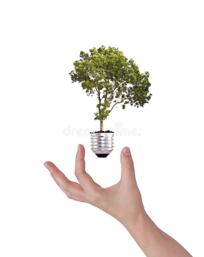 Groen energiesymbool: Gloeilamp met boom royalty-vrije stock foto's