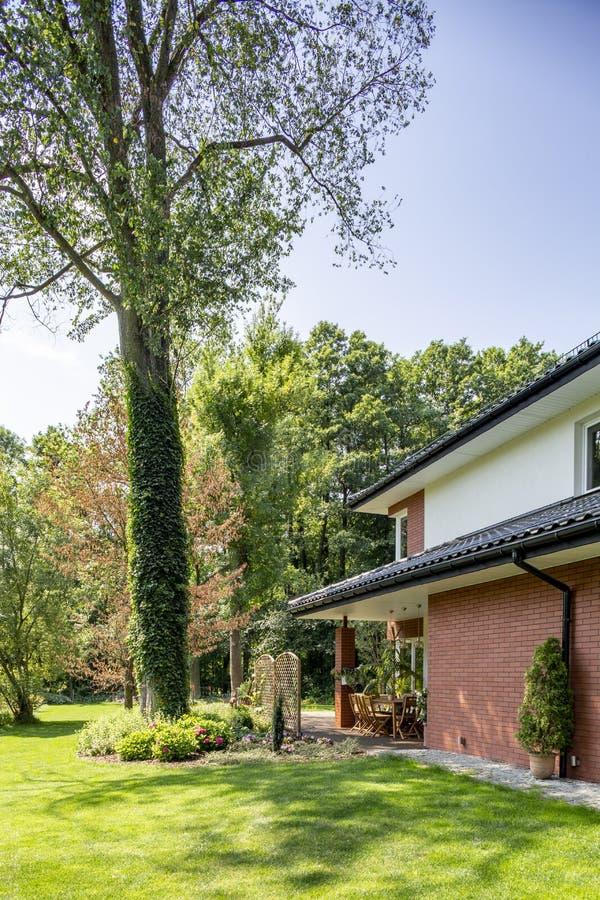 Groen gazon en grote boom in een tuin naast een huis stock afbeeldingen
