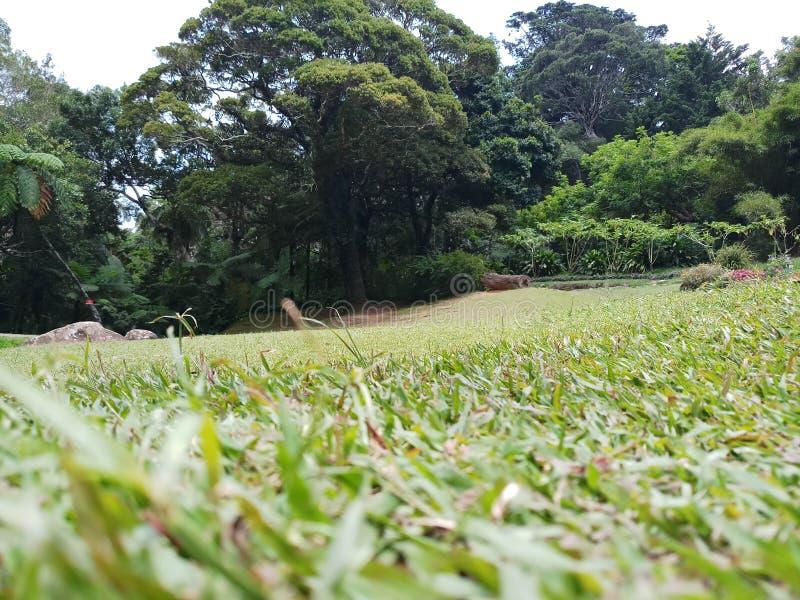 Groen gazon en reusachtige bomen stock afbeeldingen