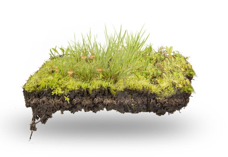 Groen geïsoleerd gras en mos royalty-vrije stock fotografie