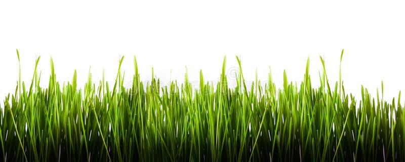 Groen geïsoleerde graspanorama royalty-vrije stock fotografie