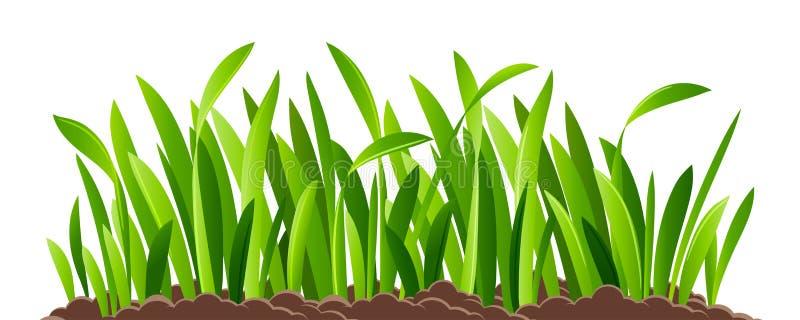 Groen geïsoleerdr gras stock illustratie