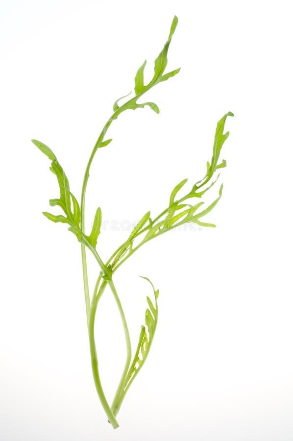 Groen geïsoleerds saladeblad stock fotografie