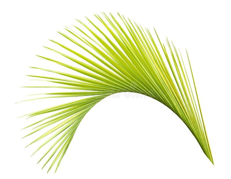 Groen ge?soleerd palmblad stock fotografie