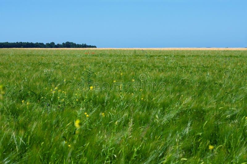 Download Groen gebied stock foto. Afbeelding bestaande uit land - 10782462