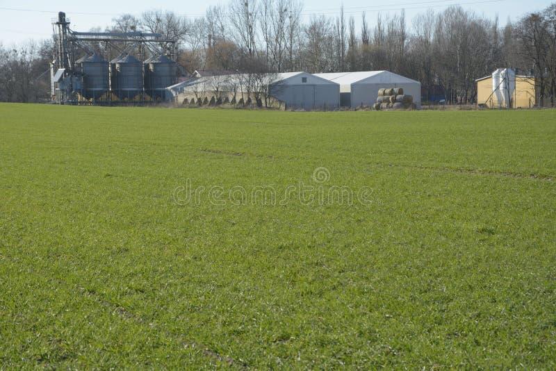 Download Groen gebied stock foto. Afbeelding bestaande uit tapijt - 39111350