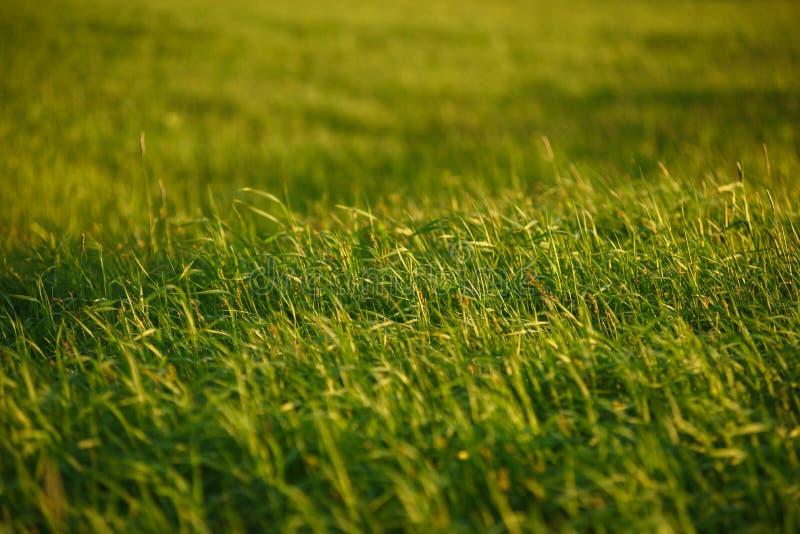 Groen gebied door de zonsondergang stock foto