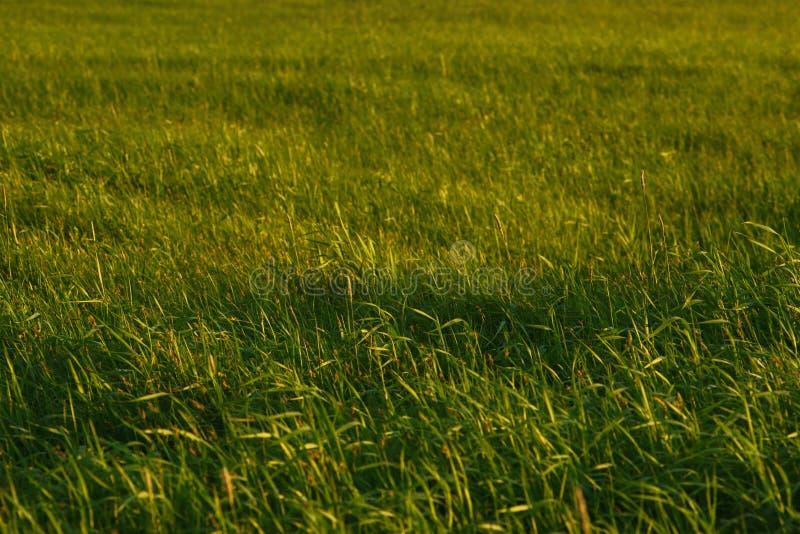 Groen gebied door de zonsondergang royalty-vrije stock fotografie