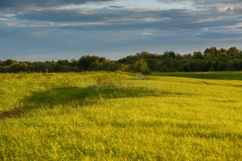 Groen gebied door de zonsondergang royalty-vrije stock foto's