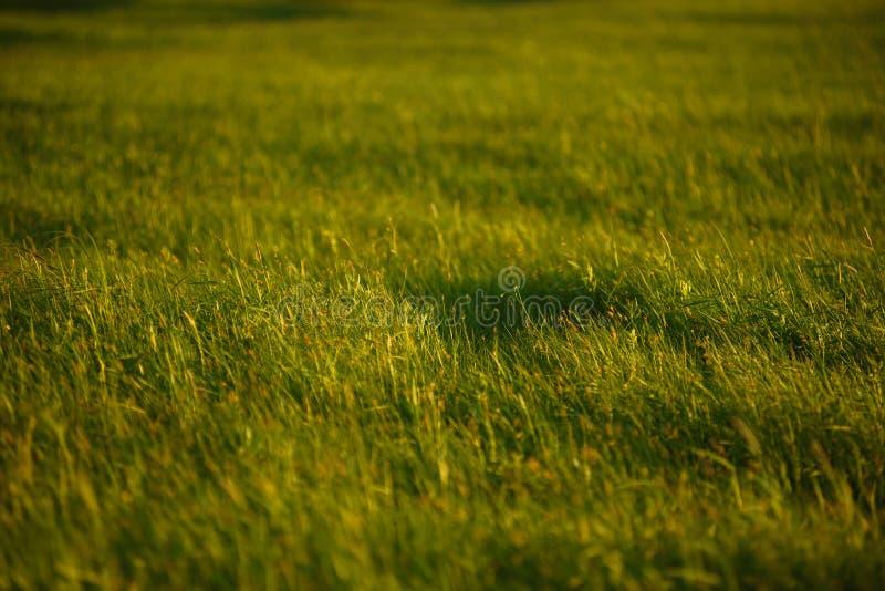 Groen gebied door de zonsondergang stock foto's
