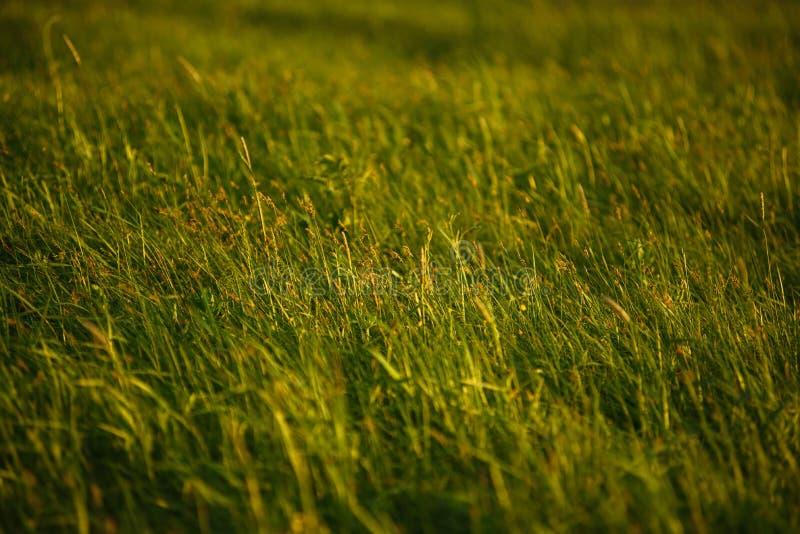 Groen gebied door de zonsondergang stock afbeeldingen