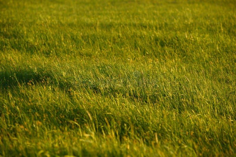Groen gebied door de zonsondergang royalty-vrije stock foto