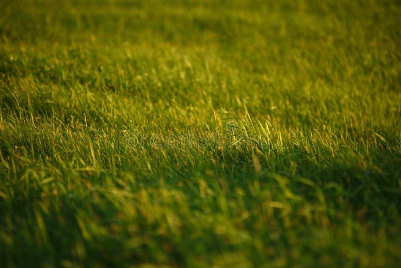 Groen gebied door de zonsondergang stock afbeelding