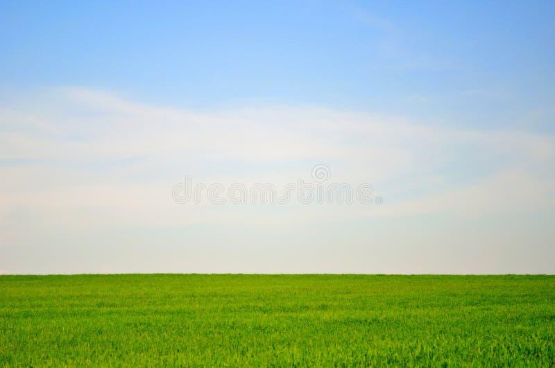 Groen gebied en blauw hemellandschap stock foto's