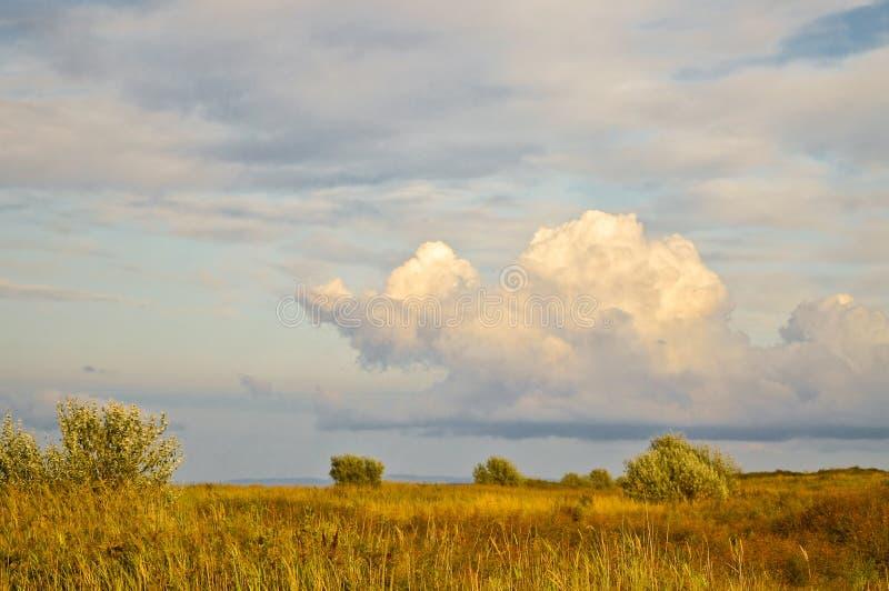Groen gebied en blauwe hemel stock afbeeldingen