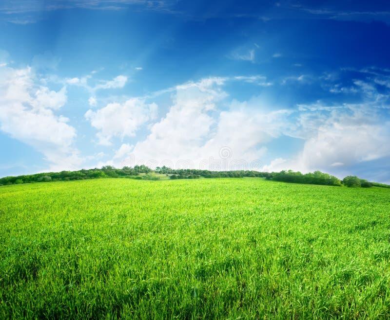 Groen gebied en blauwe hemel stock afbeelding