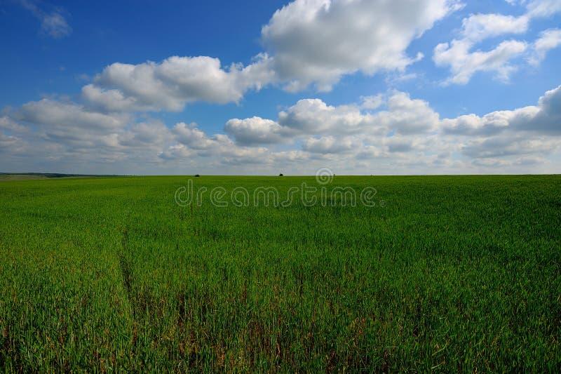 Download Groen Gebied En Blauwe Hemel Stock Foto - Afbeelding bestaande uit gebied, nave: 39107576
