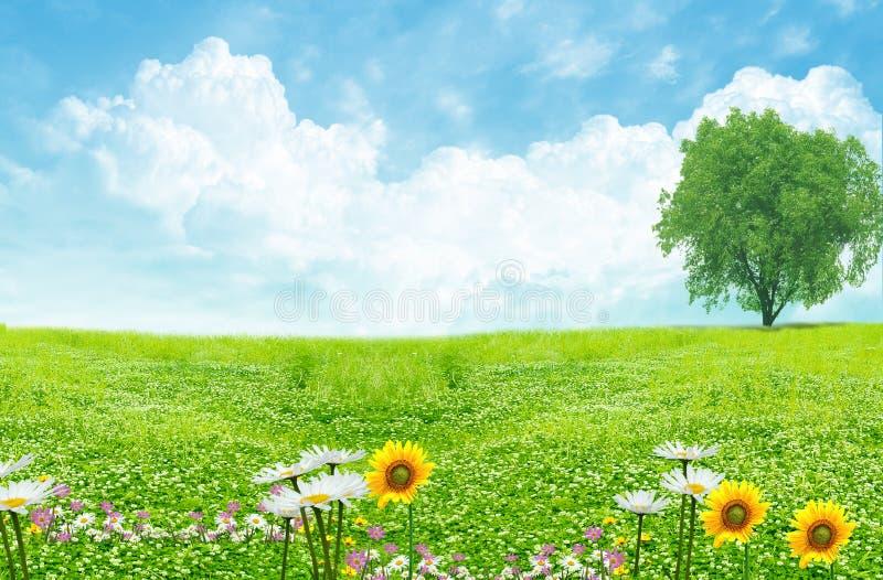 Groen gebied en witte wolken royalty-vrije stock afbeeldingen